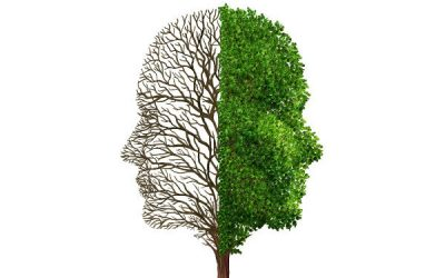 A tree shaped like a head with one half leafy and the other barren